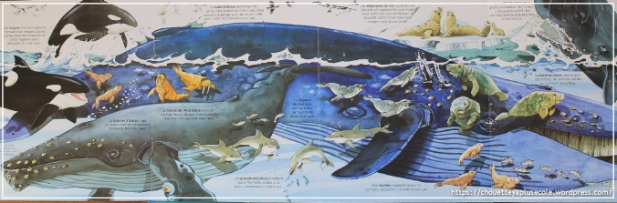 animaux marins usborne