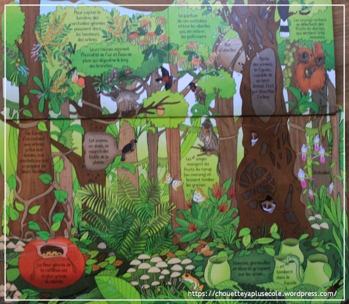 La jungle Usborne1