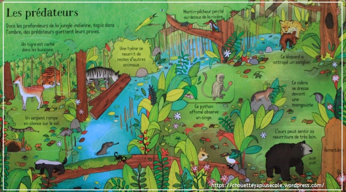 La jungle Usborne4