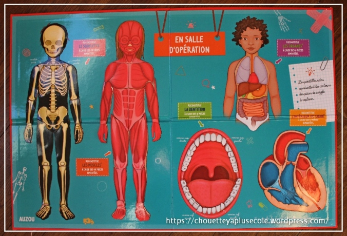 le-corps-humain-a-reconstiturer-auzou-6